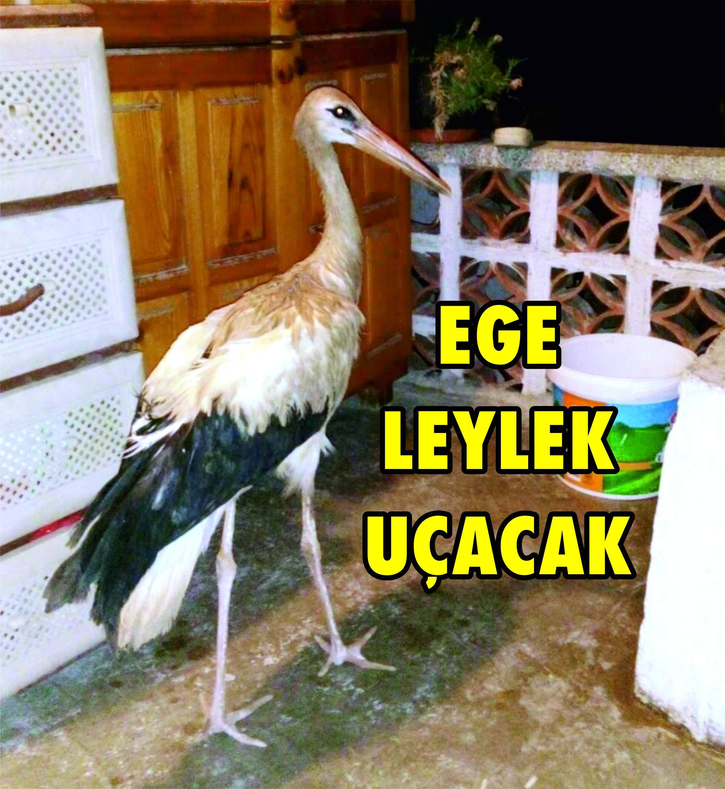 """""""EGE"""" LEYLEK UÇACAK"""